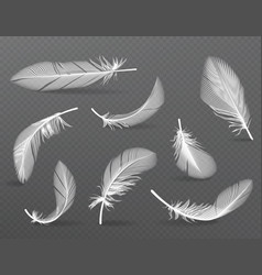 Realistic angel or bird soft feather falling set vector
