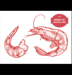 collection of hand drawn pastel shrimp vector image