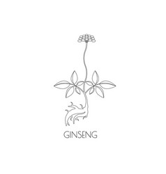 Ginseng line icon vector