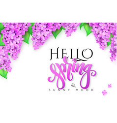 hello spring banner with lettering lilac vector image