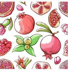 pomegranate seamless pattern fruit and nature vector image