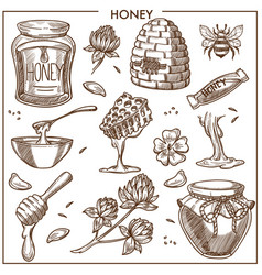 sweet honey from apiary isolated cartoon vector image