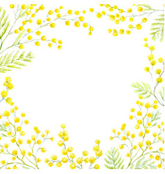 Watercolor mimosa frame vector