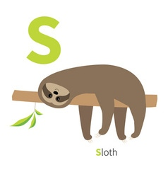 Letter S Sloth English abc with animals Zoo vector image