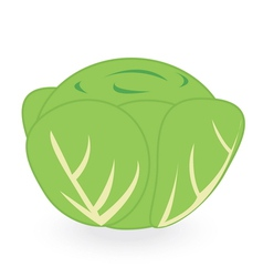 lettuce isolated on white background vector image vector image