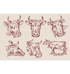 hand drawn sketch set cow and bull vector image vector image