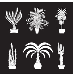 Tropical plants Set of flat potted houseplants vector image