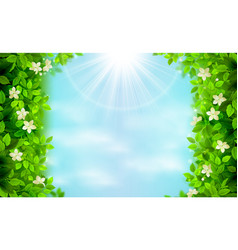 spring and summer branches with fresh green leaves vector image