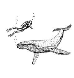 whales sketch set hand drawn zoo vector image