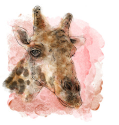 Giraffe on watercolor painting art vector