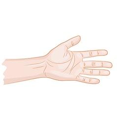Man hand isolated vector