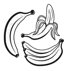 bananas monochrome objects or design elements vector image