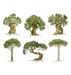Big set engraved hand drawn tree include pine vector