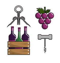 bottles of wine grape and take out cork vector image
