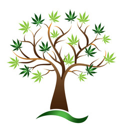Cannabis tree marijuana icon vector