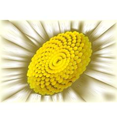 center of flower vector image