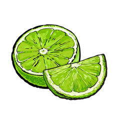 half and quarter of ripe green lime hand drawn vector image