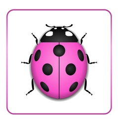 Ladybug realistic cartoon icon vector