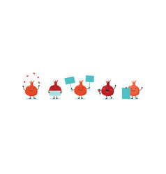 pomegranate symbols of jewish holiday rosh vector image