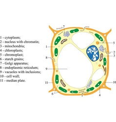 Scheme of structure of the plant cell poster vector