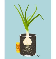 Growing Garlic with Green Leafy Top in Mug vector image vector image