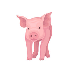 Adorable pink pig standing isolated on white vector