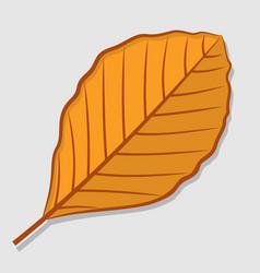 Beech autumn leaf flat design vector