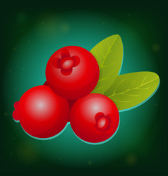 forest cranberry with leaves vector image