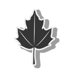 Leaf canadian autumn icon graphic vector