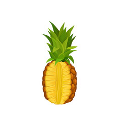ripe pineapple with cut fresh and juicy tropical vector image