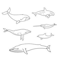 Sea mammals cetacea in outlines - vector