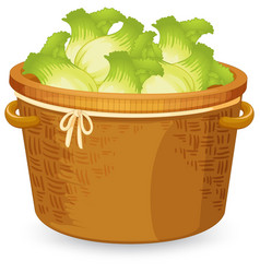 A basket of lettuce vector