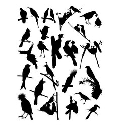 birds silhouette vector image