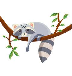 Cartoon raccoon lying on a tree branch vector