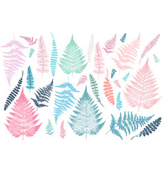 Collection of fern leaves tropical plants vector