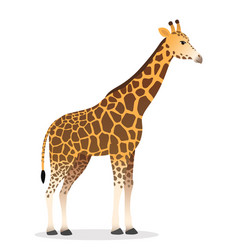 Giraffe realistic african animal wildlife vector
