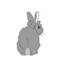 hare sits vector image