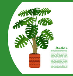 monstera plant in pot banner vector image vector image