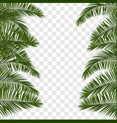 summer green palm leaf transparent vector image vector image