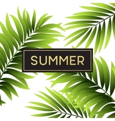Tropical palm leaves design for text card vector image vector image