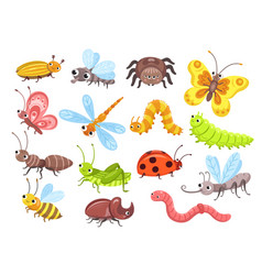 Cartoon insects fly bug cute butterfly and vector