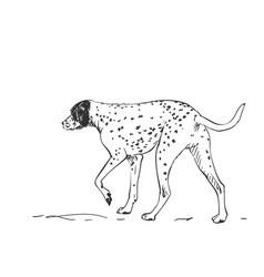 Dalmatian dog drawing walking side view sketch vector