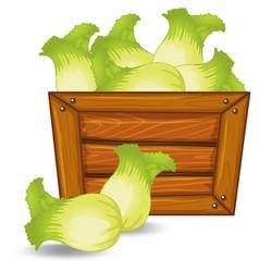Lettuce on wooden banner vector
