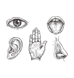 sense organs hand drawn mouth and tongue eye vector image