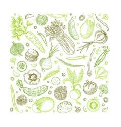Vegetable hand drawn vintage vector