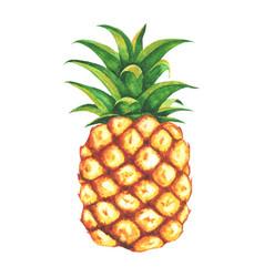 beautiful watercolor pineapple clip art vector image