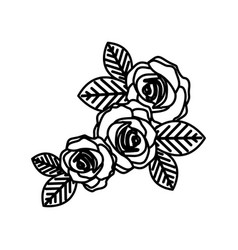 figure oval roses with leaves icon vector image