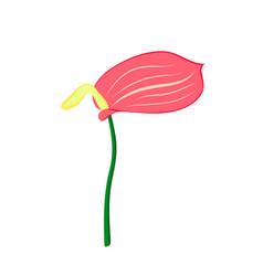 Anthurium flower vector