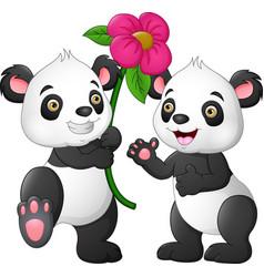 cartoon couple panda with a flowers vector image