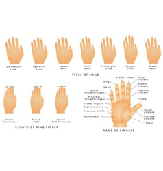 Names of the fingers vector